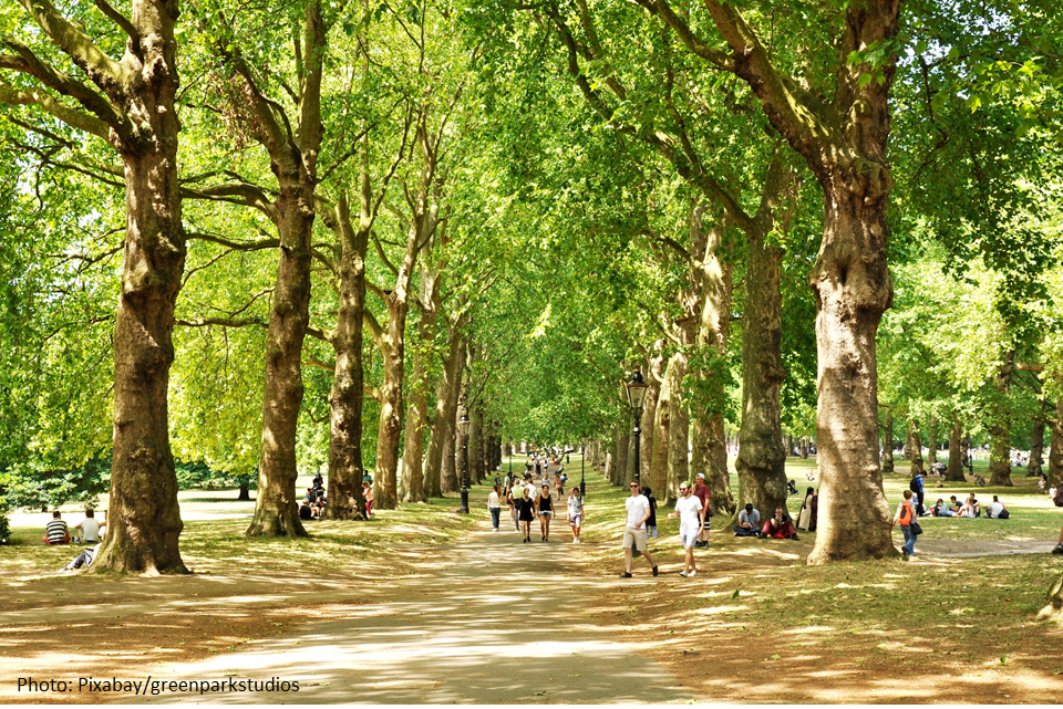 People walking down tree-lined path in park in sunshine