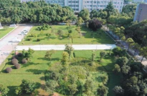 Aerial view of rain garden - grassland, trees and vegetation, surrounded by buildings
